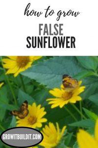 Heliopsis Helianthoides, False Sunflower Pintrest