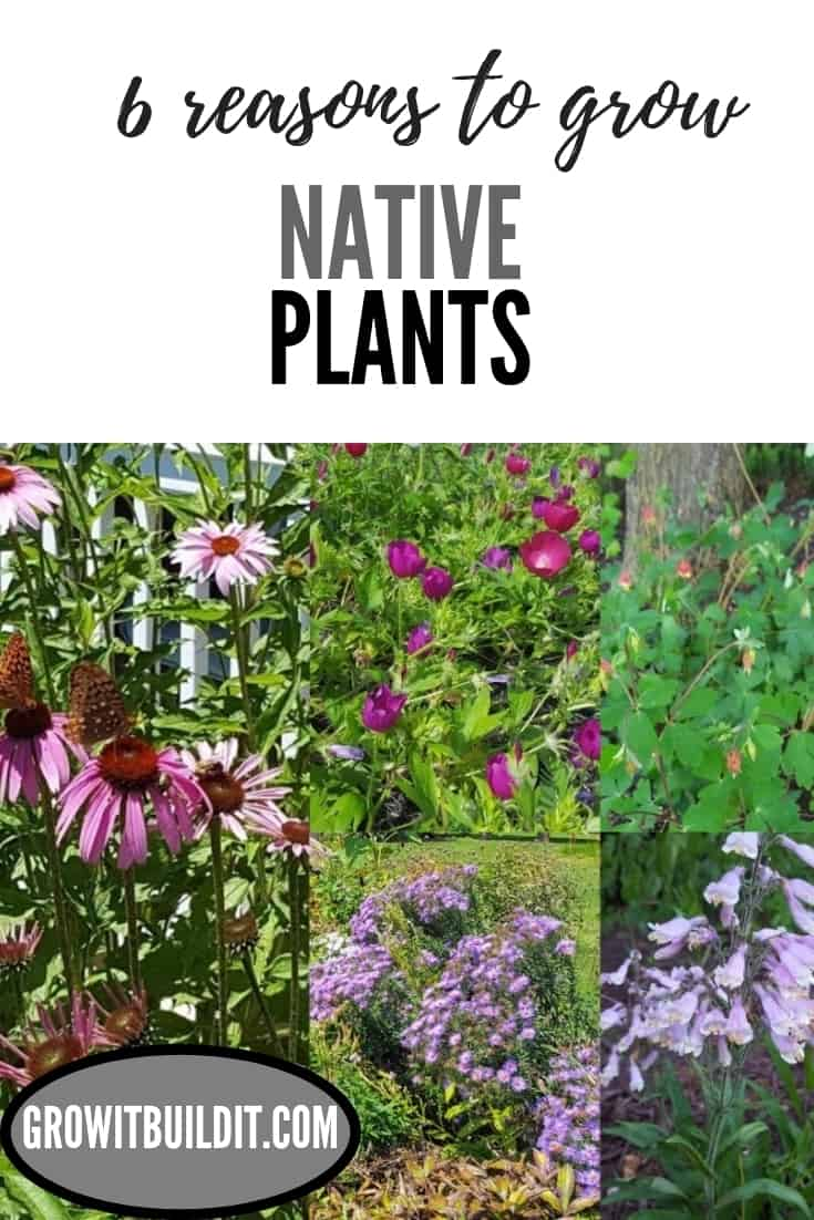 6 reasons to grow native plants