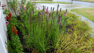 native plant flower bed