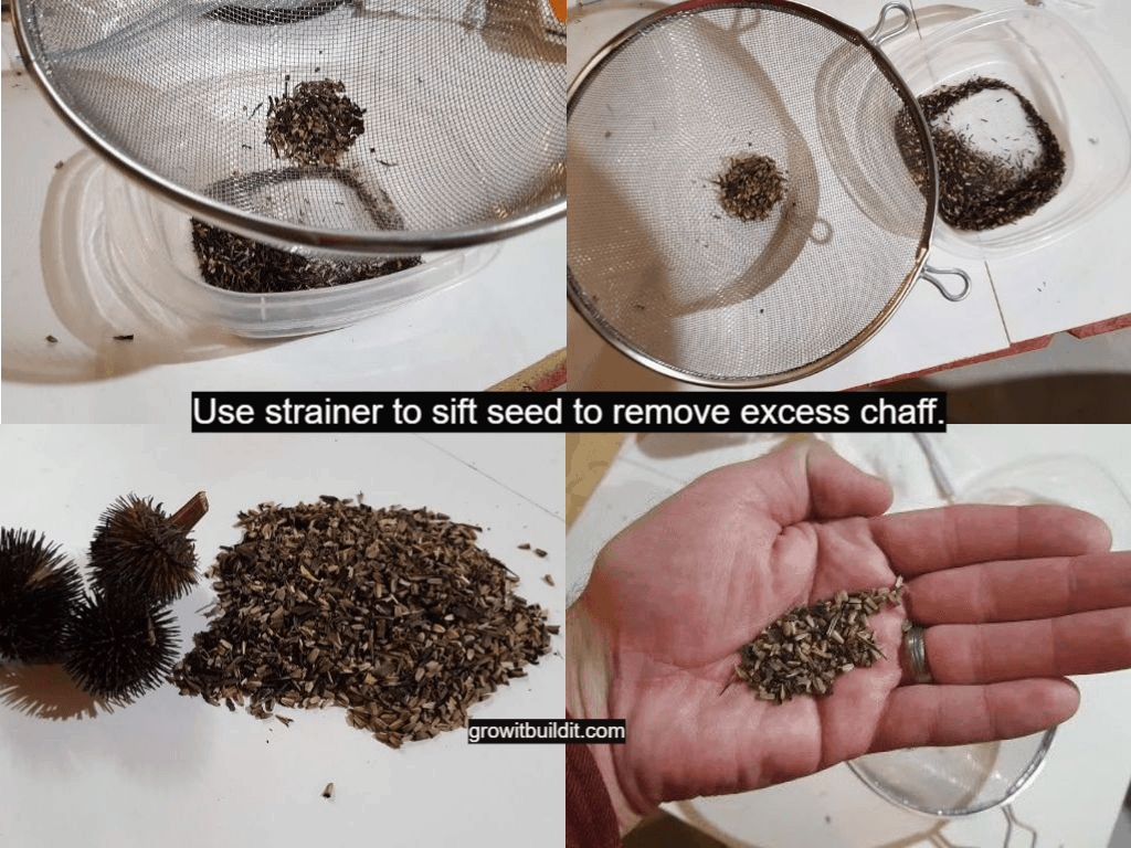 sift seed to remove chaff