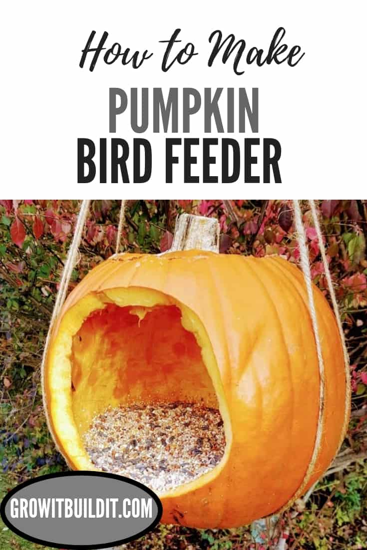 pumpkin bird feeder pin