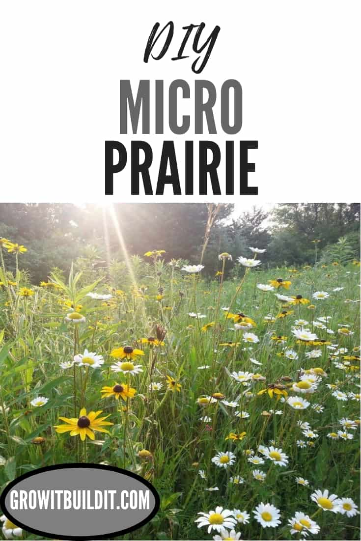 Micro Prairie Make Your Own DIY How-TO