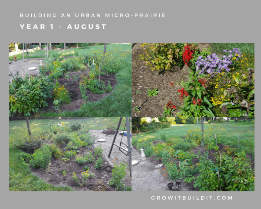 building micro-prairie first year