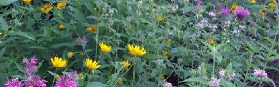 Create Your Own Micro Prairie Wildflower Garden