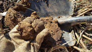 bad clay soil