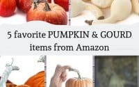 5 favorite pumpkin and gourd items from amazon