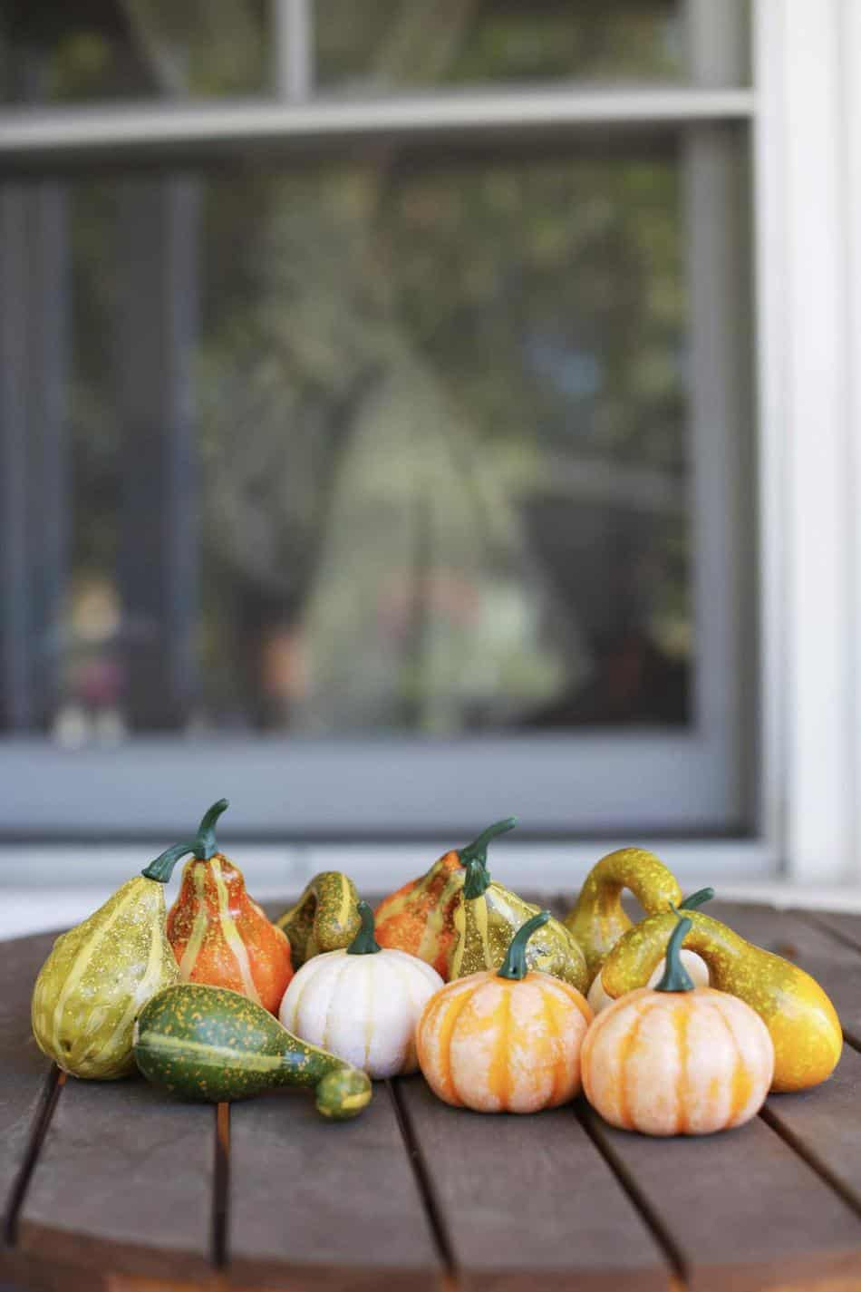 gourds and mini pumpkins amazon