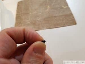 scarifying eastern redbud seed