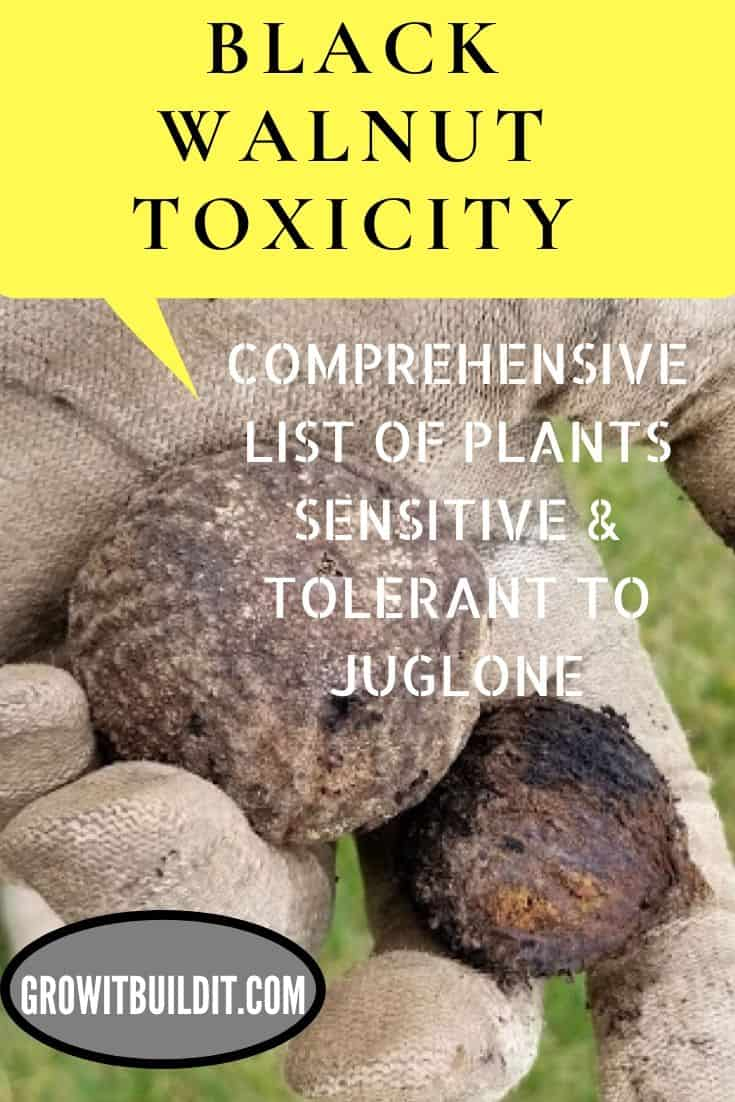 black walnut toxicity juglone