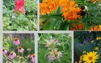 the 5 native plants you need in 2020