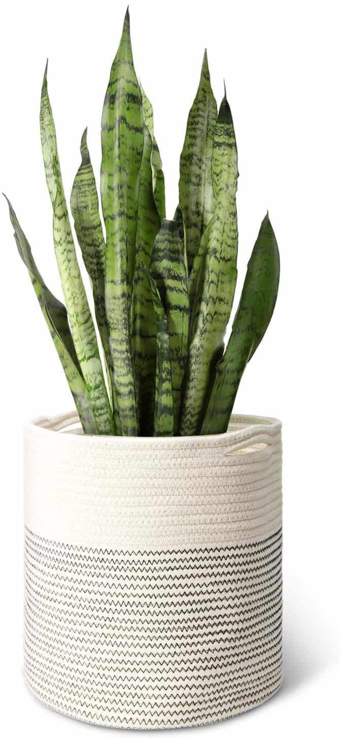 Cotton Rope Plant Basket 12x12