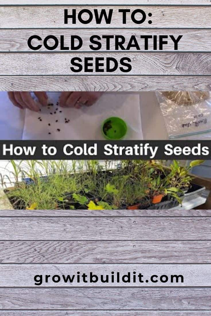how to cold stratify seeds
