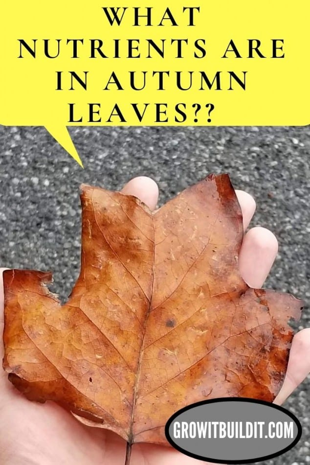 nutrients in autumn leaves